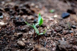 seedling-1262982-m